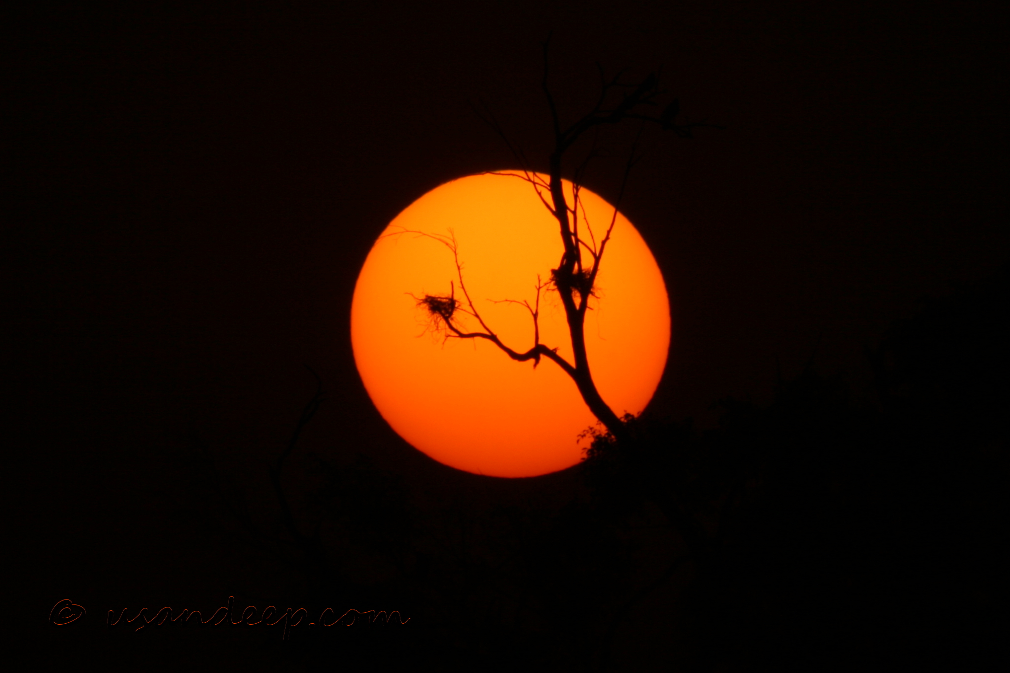 Setting sun and a nest