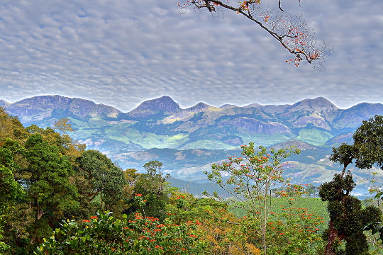 View of Munnar hills from Poopara